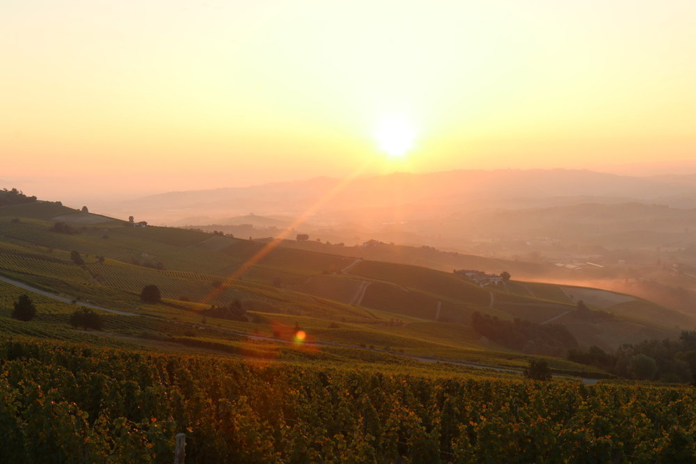 early morning [shine] - barolo, italy