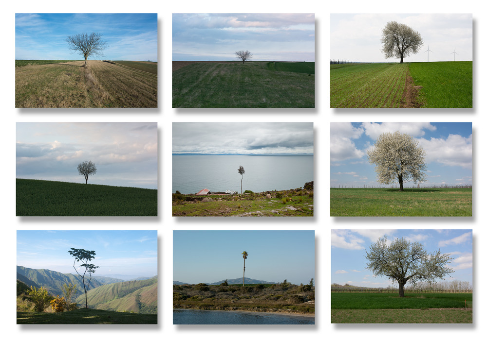 serie lonely trees.jpg