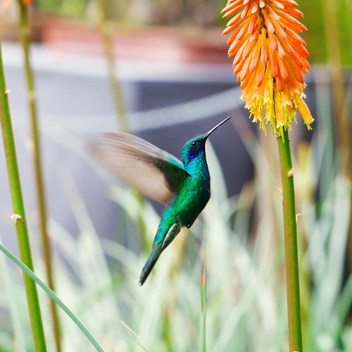 Hummingbirds embody lightness of being, lifting up negativity, swiftness, adaptability, resiliency, and bringing playfulness and joy to life. This is the perfect symbol for the role of counseling, coaching and education!