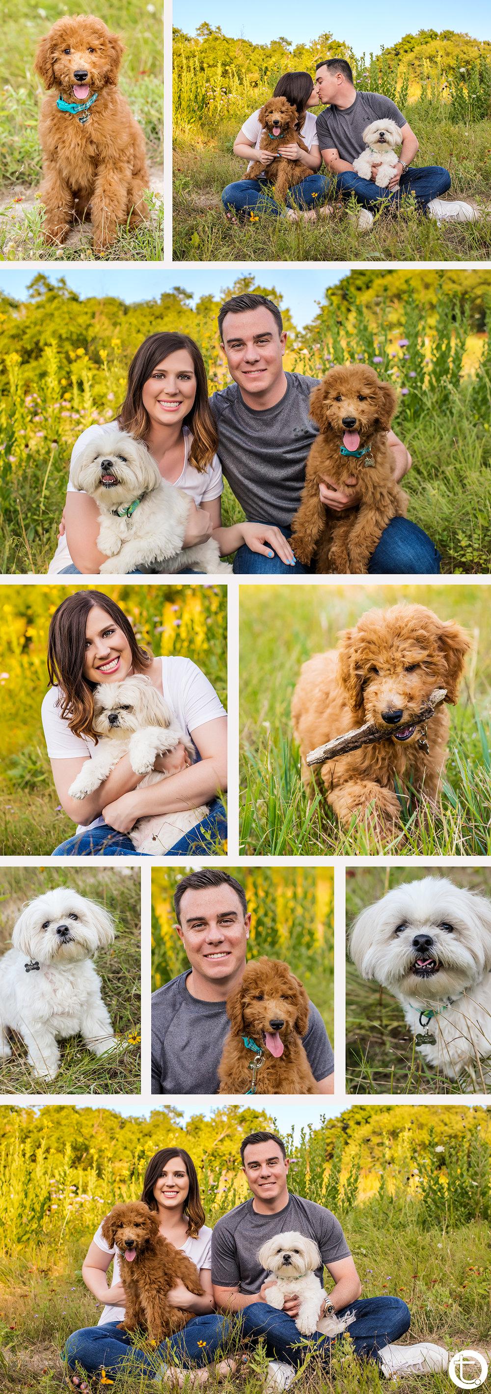 kelseybradydogs