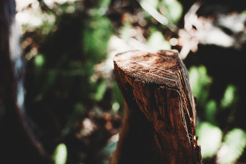 Pender Island Photographer - Amber Briglio Photography - the heart of pender project part 2 (1 of 45).jpg