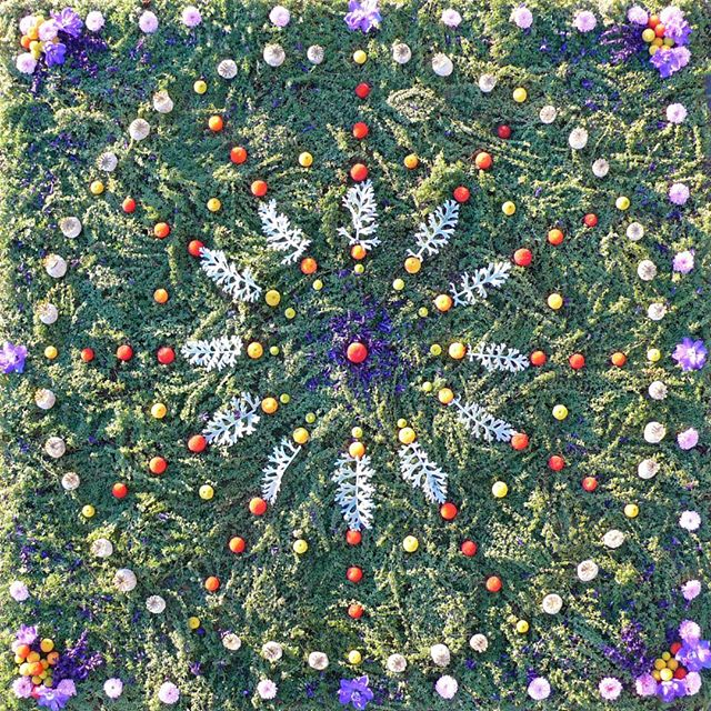 "TBT. Where The Wild Thyme Blows (4' x 4') ~ thyme, poppy pods, salvia, arbutus unedo fruit, delphiniums, purple mums. ""Painting"" with thyme is like creating a magical carpet in the elemental realms.  This is a lemon thyme, so even more fragrant. . . . . . . . . . #sacredart #sacredspace #naturemandala #flowermandala #healingmandala #earthprayer #natureart #botanicalmandala #gypsysoul #bohemianstyle #spiritualart #intuitiveart #floweralchemy #flowermagic #flowermedicine #natureprayer #seedscolor #underthefloralspell #byarrangement #flowerstagram #florallove #flowerart #flowermagic #mybotanicalheart #aquietstyle #slowfloralstyle #inspiredbypetals #inspiredbynature #madewithlove #botanicaldaydreams"