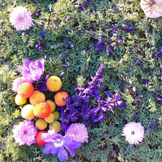Detail from Where The Wild Thyme Blows ~ thyme, poppy pods, salvia, arbutus unedo fruit, delphiniums, purple mums. . . . . . . . . . #sacredart #sacredspace #naturemandala #flowermandala #healingmandala #earthprayer #natureart #botanicalmandala #gypsysoul #bohemianstyle #spiritualart #intuitiveart #floweralchemy #flowermagic #flowermedicine #natureprayer #seedscolor #underthefloralspell #byarrangement #flowerstagram #florallove #flowerart #flowermagic #mybotanicalheart #aquietstyle #slowfloralstyle #inspiredbypetals #inspiredbynature #madewithlove #botanicaldaydreams