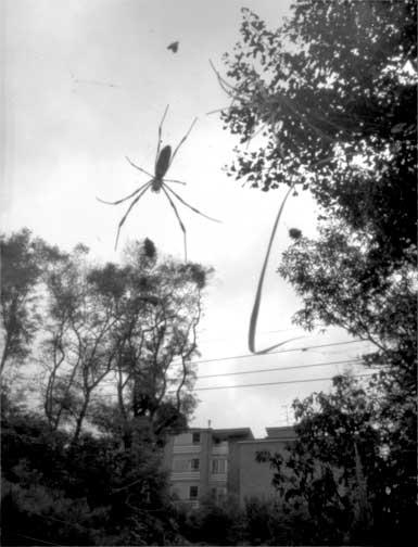 """A spider, Seoul"""