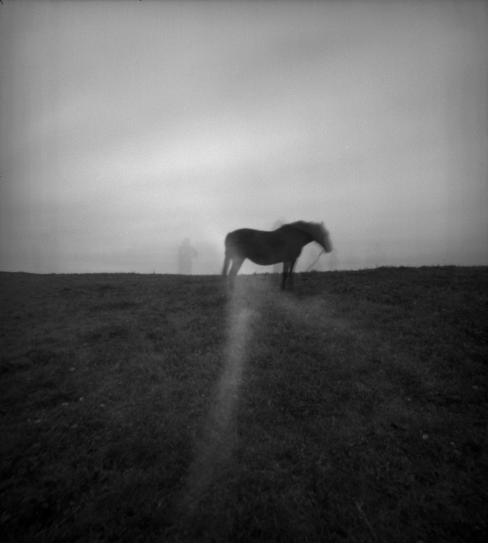 """A Horse, Jeju Island"""