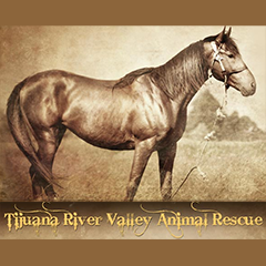 Tijuana-River-Valley-Animal-Rescue.png