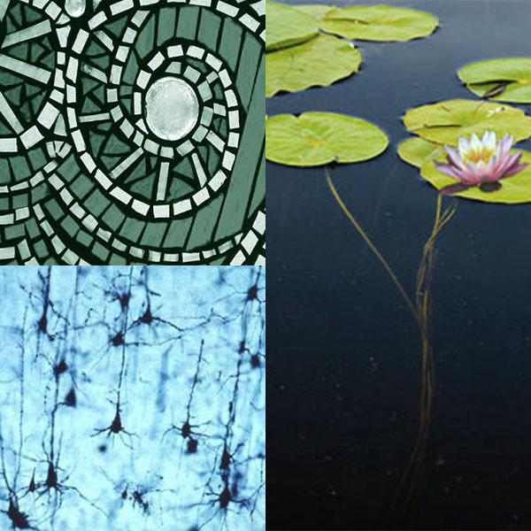 Concept images that inspired the design include: the rough, assembled quality of mosaics; the branching structures of neurons, and lily pads and their stems.