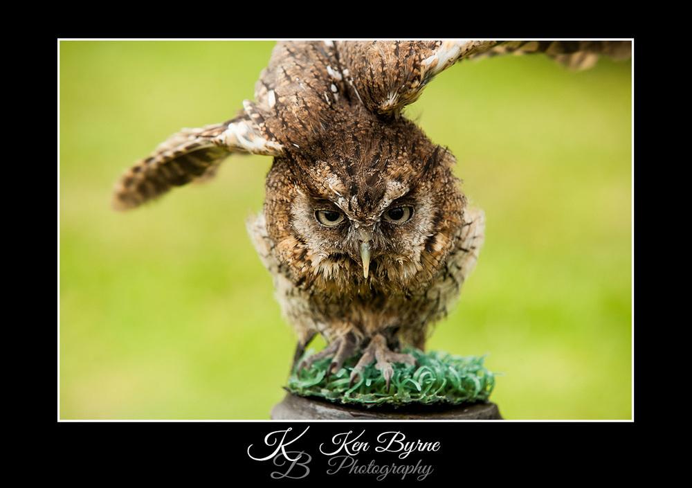 Ken Byrne Photography-260 copy.jpg