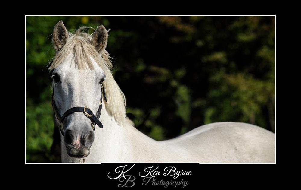 Ken Byrne Photography (261 of 382) copy.jpg
