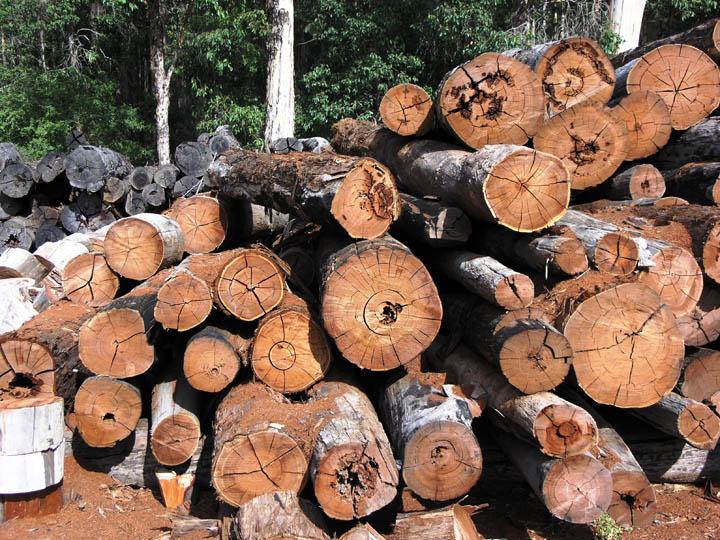 lumber 1.jpg