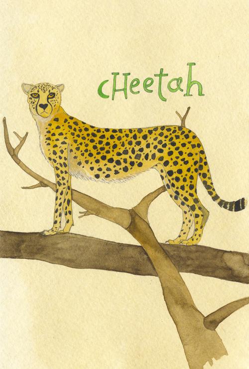 cheetah_b.jpg