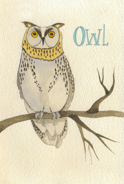 owl_b.jpg