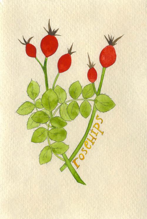 rosehips_b.jpg
