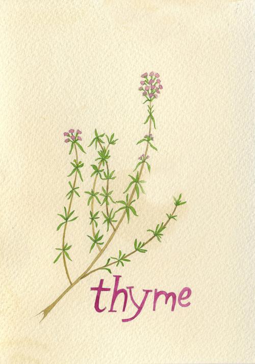 thyme_b.jpg