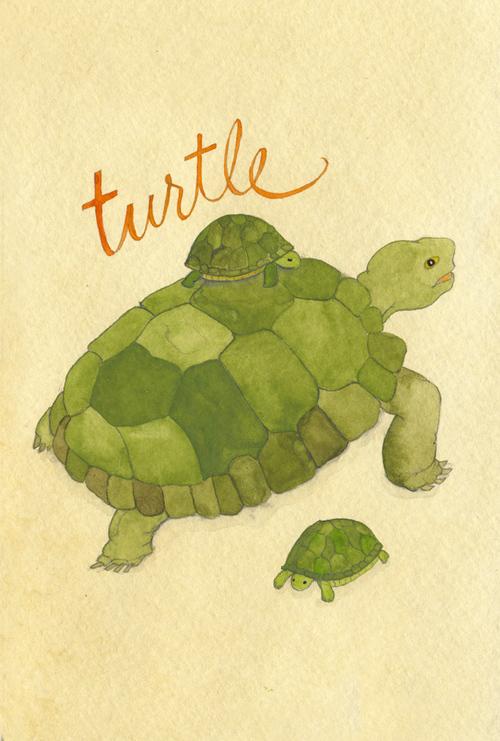 turtle_b.jpg