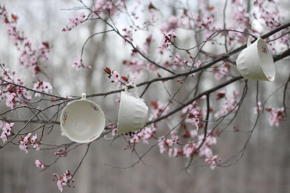 SarahMattozziPhotography-Teacups.JPG