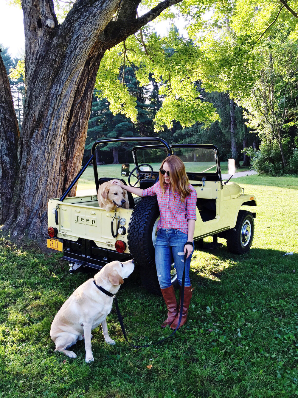 dogs with jeep.jpeg
