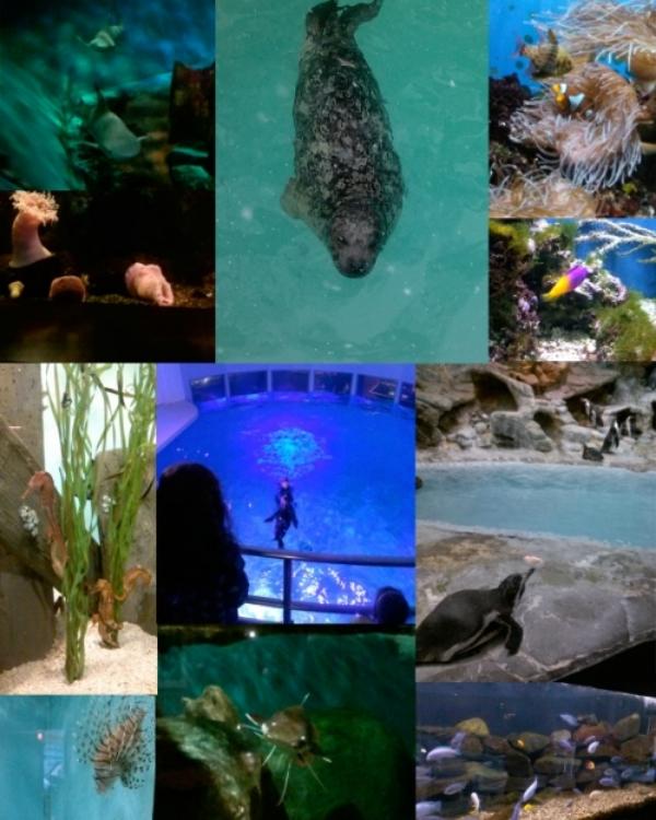 Aquarium Visit.jpg