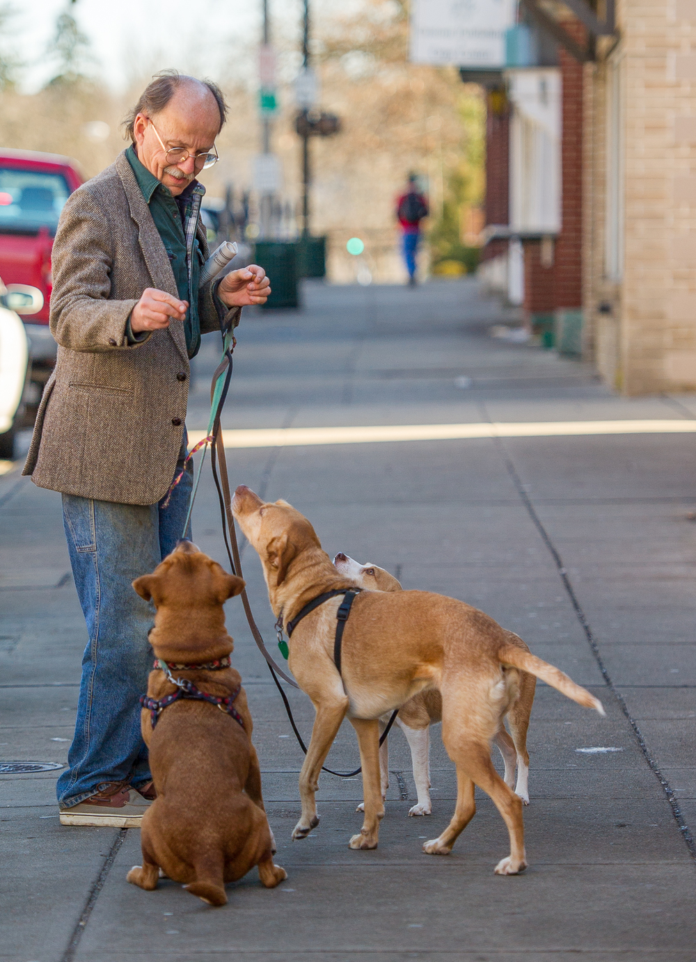 Tom Mantey, of Athens, Ohio, walks his three dogs down Athens' Union and Court streets on Monday, January 19, 2015. Mantey, owner of several pets, stops to show off a trick with his dogs.