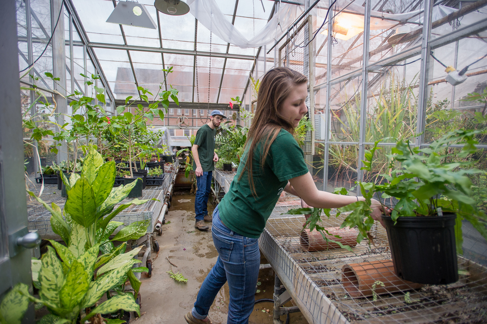 "Bethany Zumwalde, an Ohio University graduate student studying plant biology, and Jacob Mullins, a senior studying plant biology, move plants to various parts of the greenhouse located behind Scott Quadrangle in Athens, Ohio, on April 6, 2015. The students work in the greenhouse to supplement their educational experience in their field of study. ""Being in the greenhouse is an overwhelming sensory experience because you get the opportunity to see and smell hundreds of different plants from all over the world,"" says Zumwalde. (©2015 Sarah Stier for VICO 2390)"