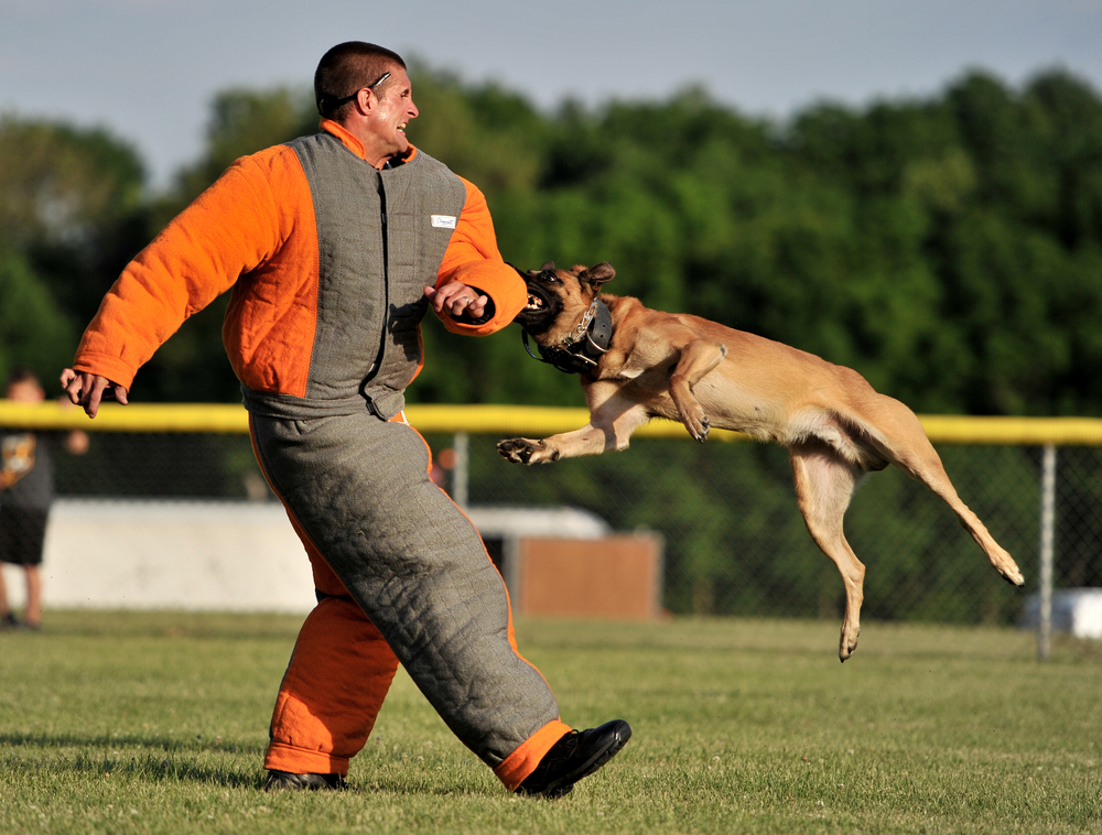 Reading Police Officer Josh Faust, of Reading, PA, participates in a K-9 demonstration at the Strike Out Cancer event in Bernville, PA, on June 19, 2016. (Reading Eagle: Sarah Stier)