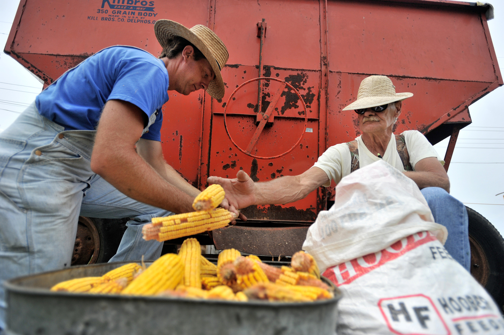 Ben Sonon (left) of Hamburg and David Masters of Hamburg shuck corn at the Kutztown Folk Festival in Kutztown, PA, on July 3, 2016. (Reading Eagle: Sarah Stier)