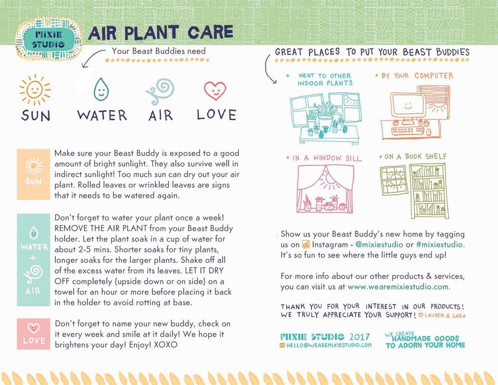 air plant care mixie studio. Black Bedroom Furniture Sets. Home Design Ideas