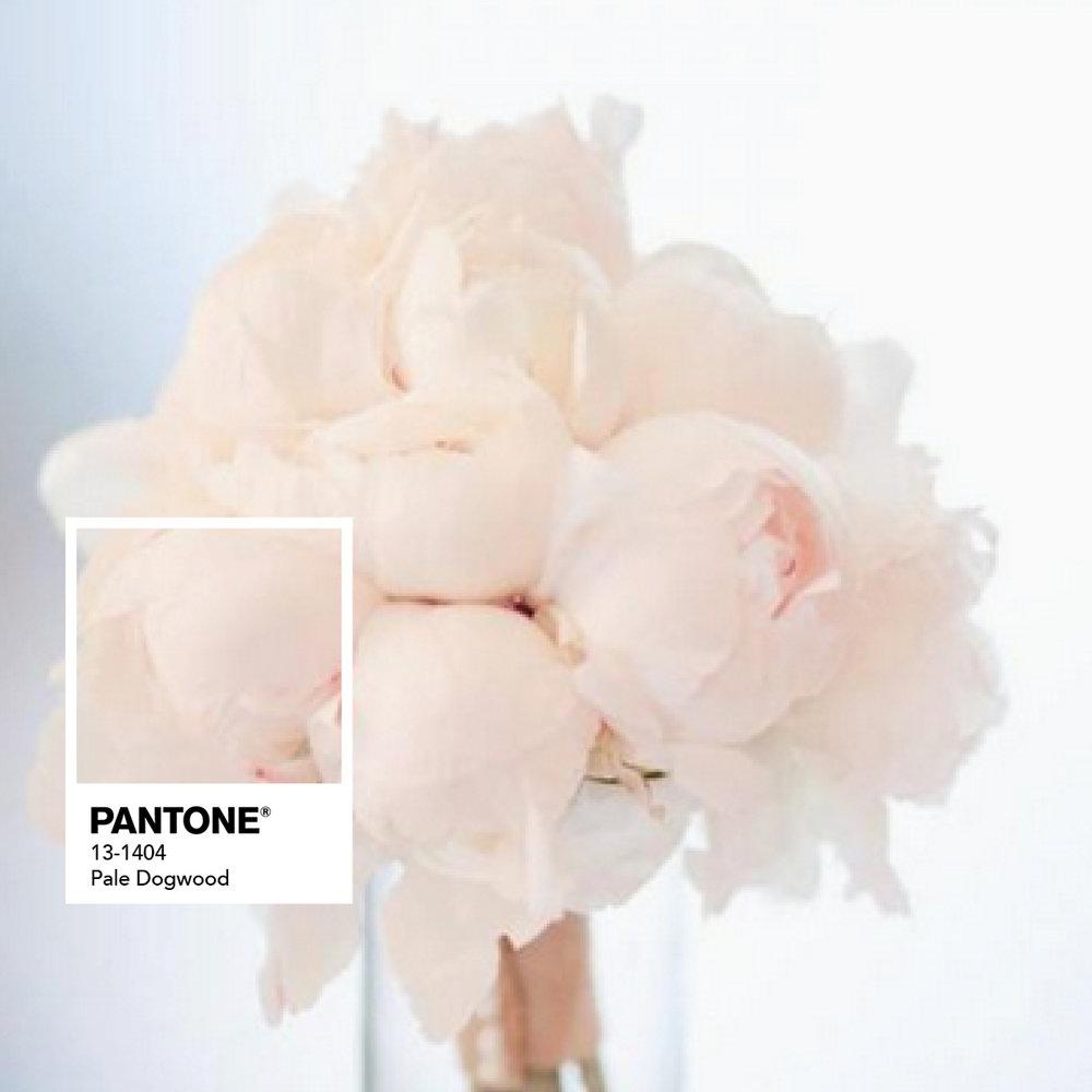 PANTONE  Blush Pink.jpg