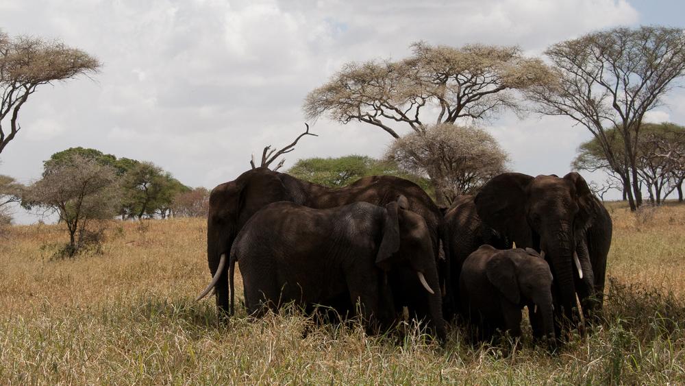 Tanzania-0956.jpg