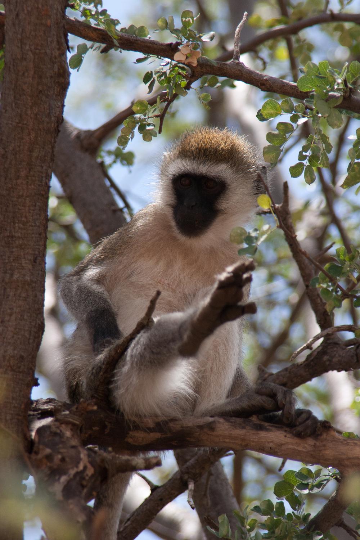 Tanzania-0972.jpg