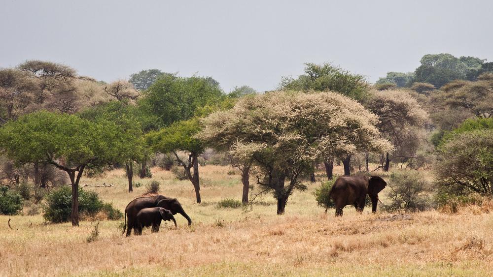 Tanzania-1012.jpg