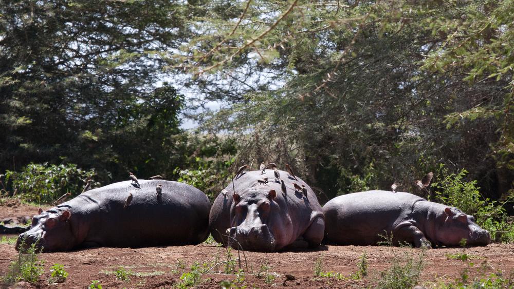 Tanzania-1223.jpg