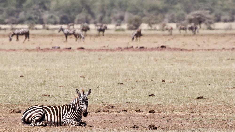 Tanzania-1263.jpg