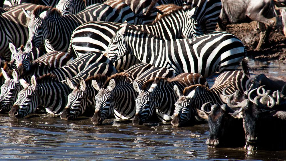 Tanzania-1635.jpg