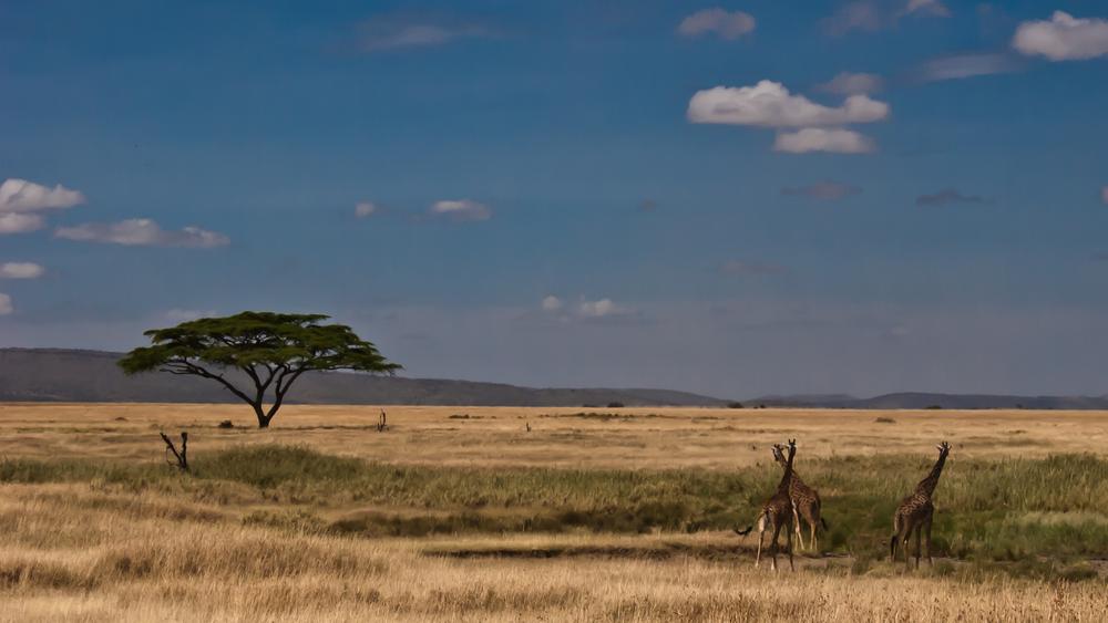 Tanzania-2294.jpg