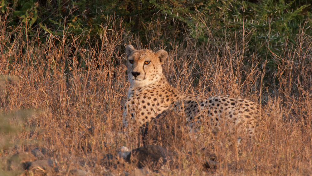 Tanzania-2398.jpg