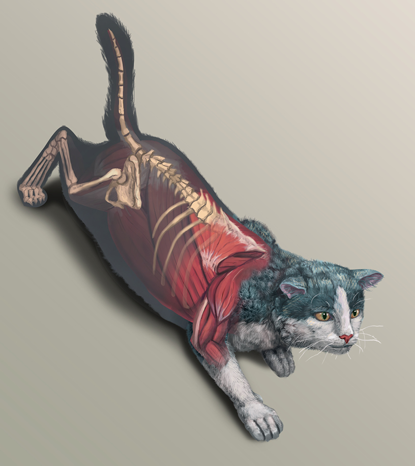 Ward's Cat Anatomy: Dissection Manual Cover Concept