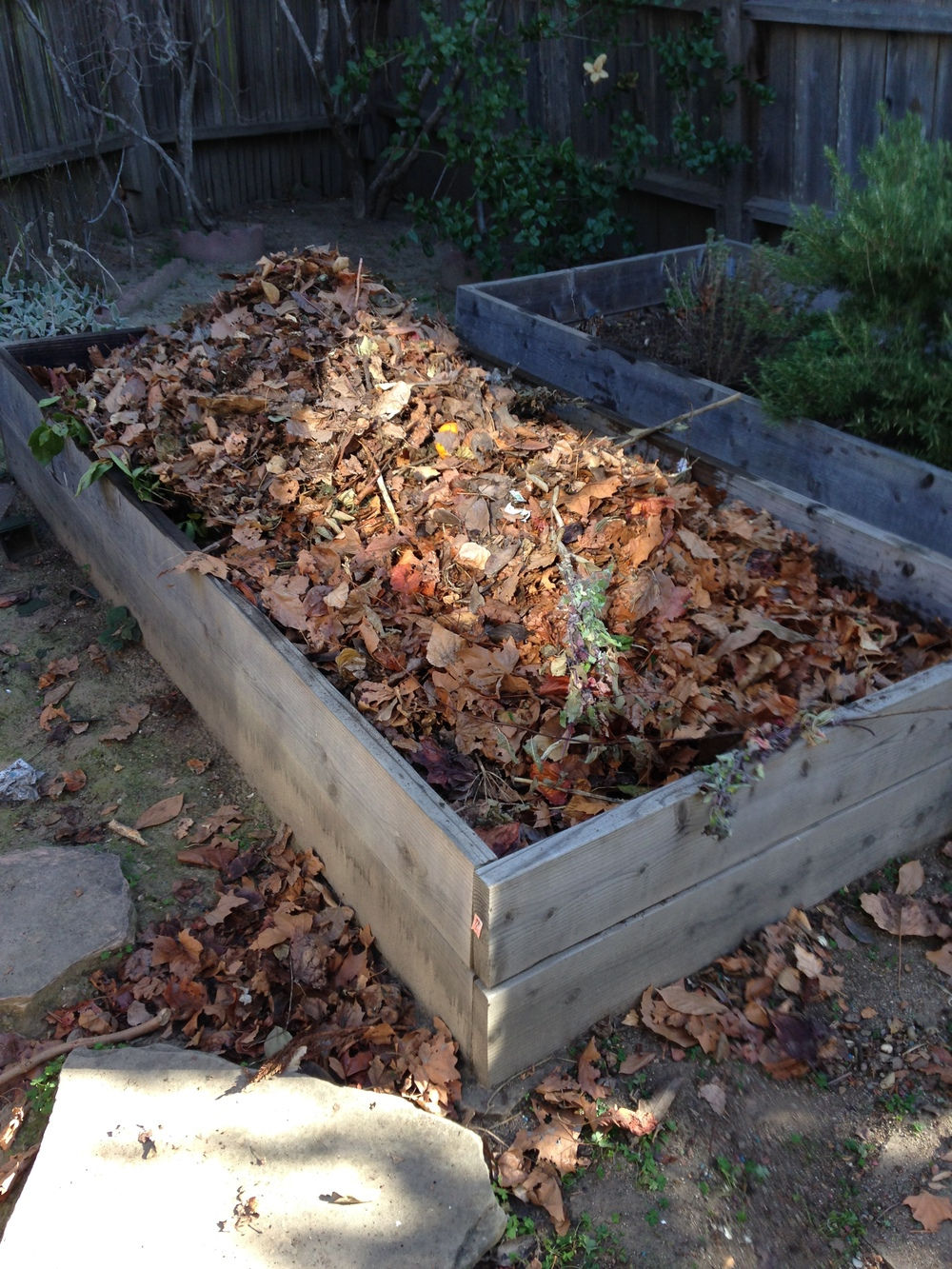 Here's the old garden bed with all the un-decomposed stuff from the compost bin on top. I watered it deeply and now we wait. Although most likely I'll be turning this one instead of being lazy as usual.