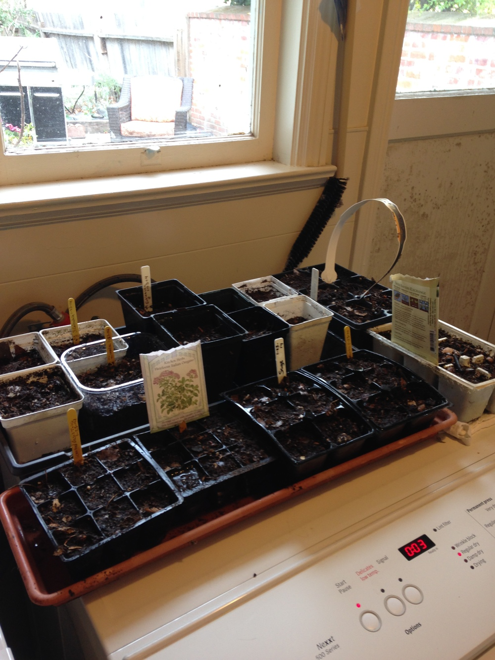 seed trays one.jpg