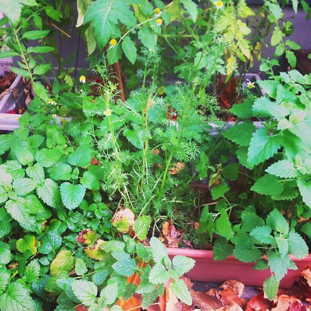 potted garden.jpg