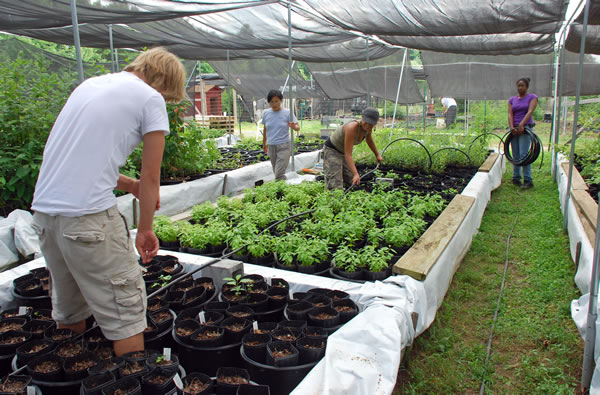 Earth Sangha Volunteers working in the Native Tree Nursery.