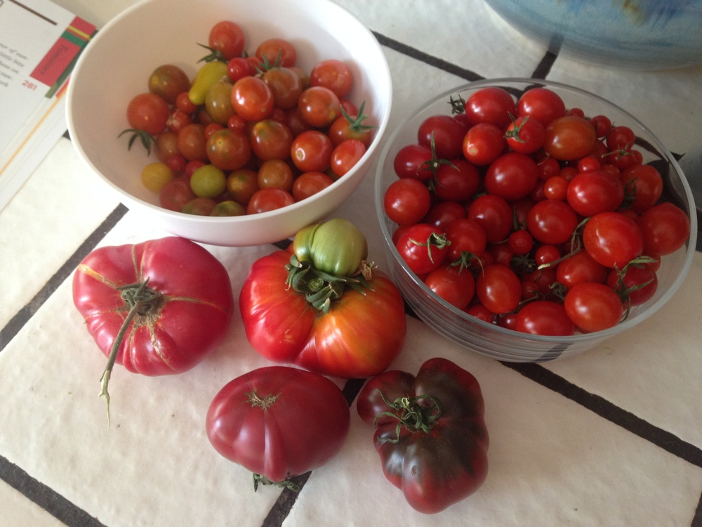 Here's what I started with. A load of tomatoes to be processed.