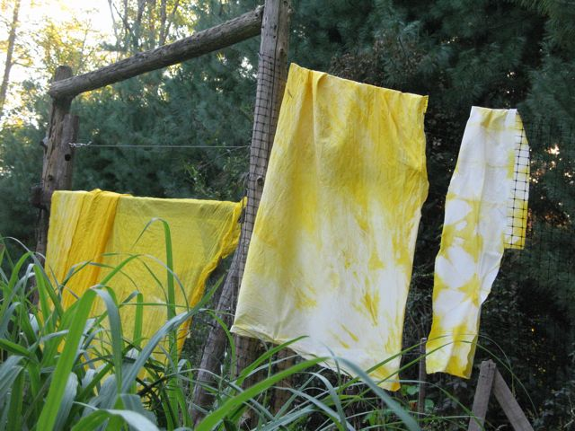Turmeric dyed fabric. Photo credit: Vagabond's daughter.