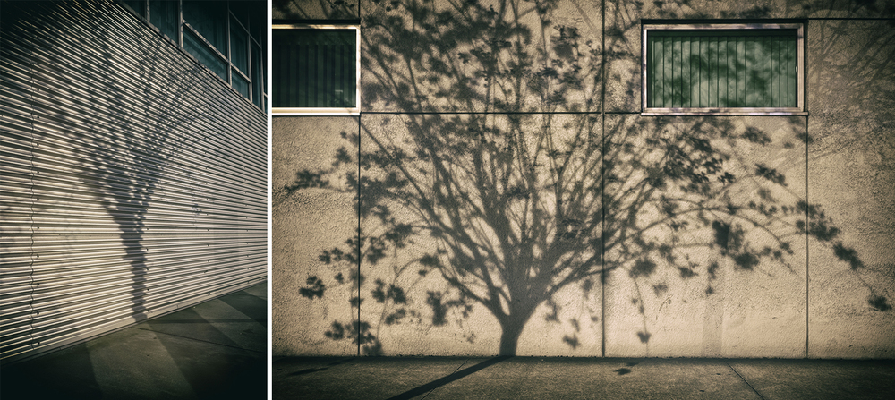 """Nighttime Shadow Trees, Featuring the photo """"Stand"""", by Linz Welch"""
