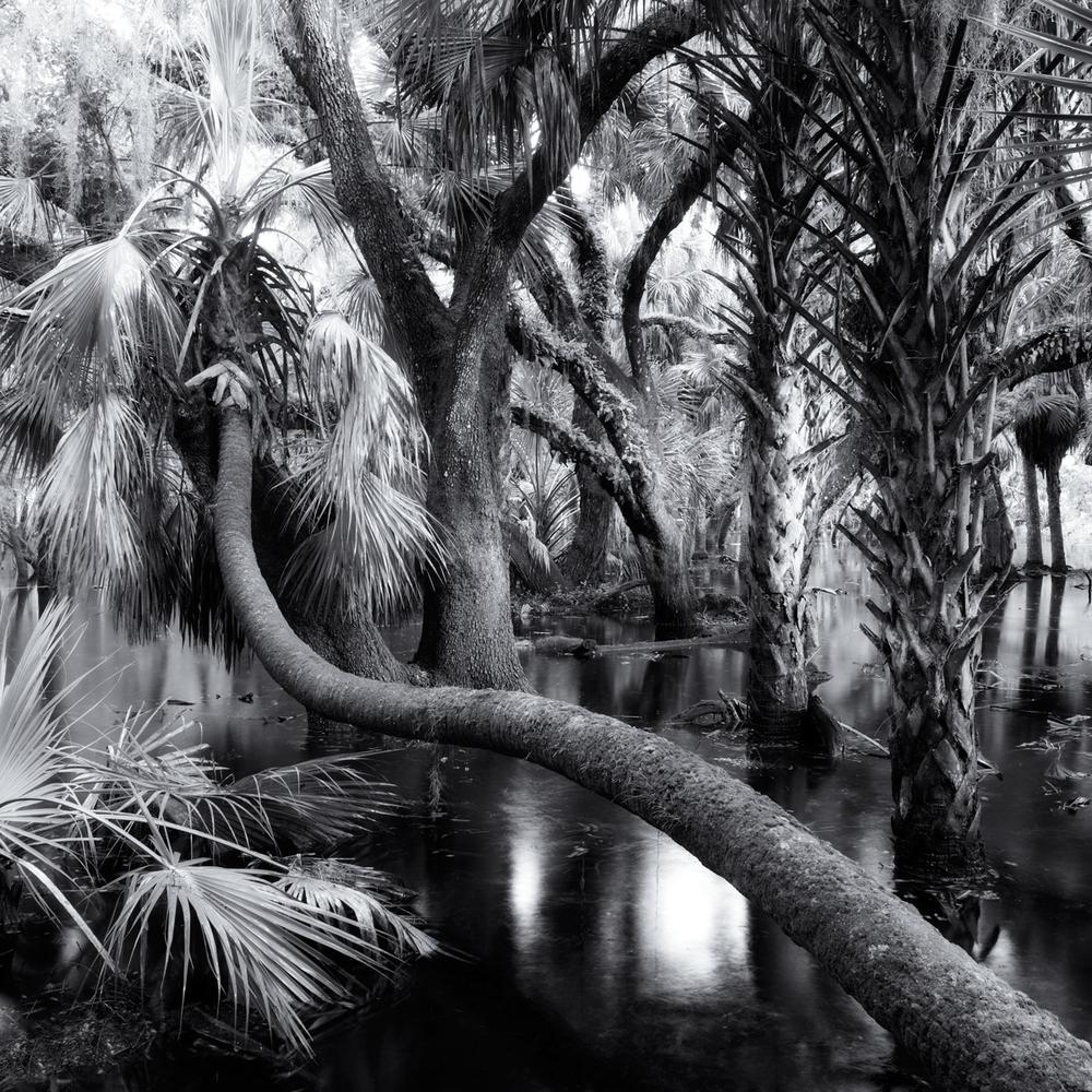 """""""Myakka Park Drive 1, Sarasota"""" by Scott Bolendz"""