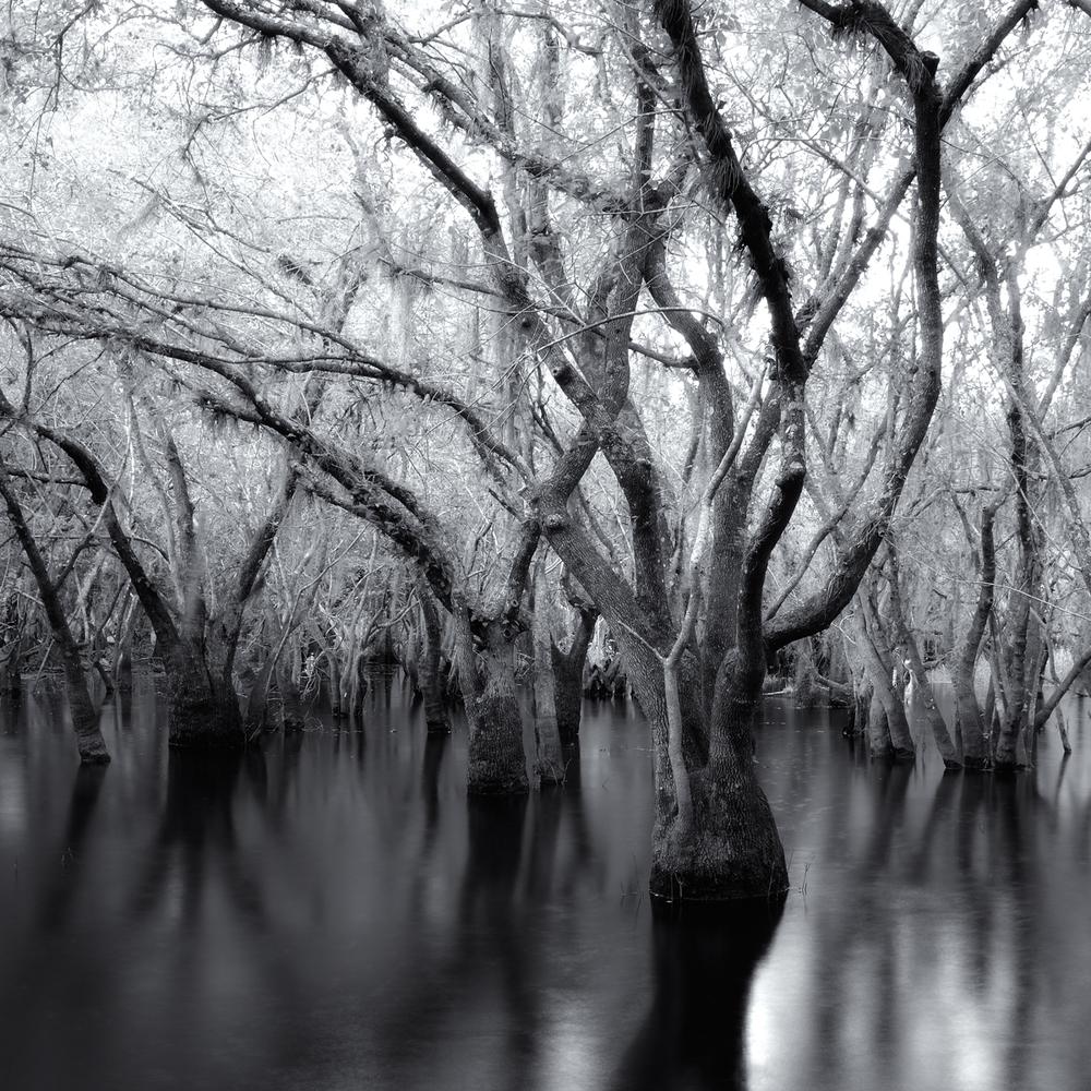 """""""Myakka Park Drive 2, Sarasota"""" By Scott Bolendz"""