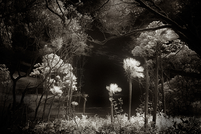 Cathy Dutertre, 2013, Canon 5D MKII, 725nm, 28mm TS-E lens, black and white conversion