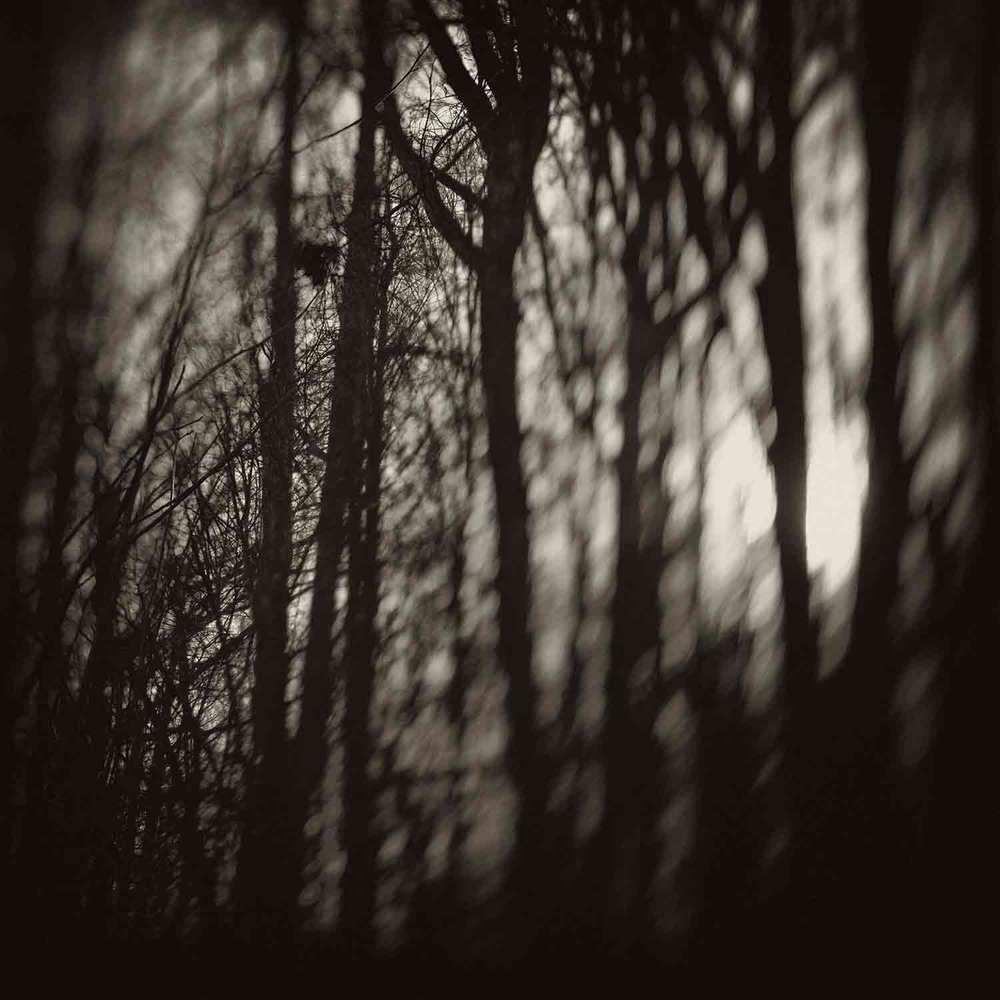 Pierre Dutertre, Barren, Deep Forest concept, 2012
