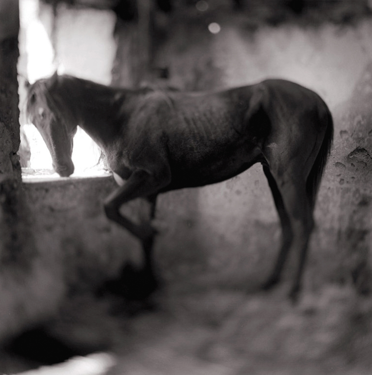 Keith Carter, young stallion, 1998