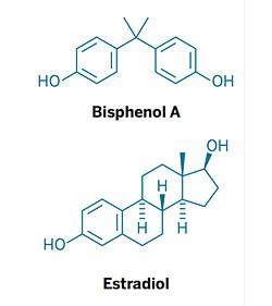 BPA-Estrogen.jpg